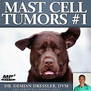 ask dr d mast cell tumors 1