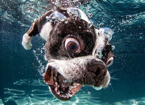 photographer captures hilarious images  dogs