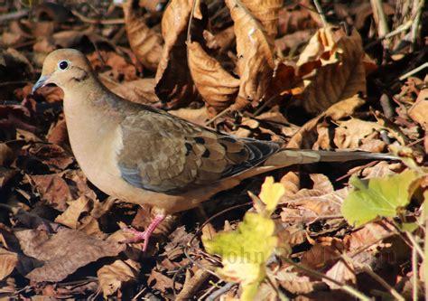 Survival Resources > Wild Bird Photo Gallery