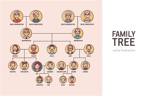 family tree illustration  images family tree
