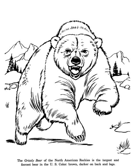 drawings  wild animals animal drawings coloring pages