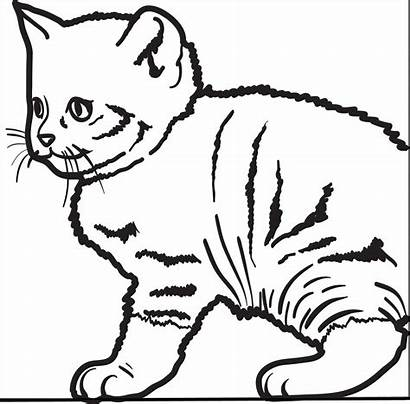 Cat Coloring Kitty Printable Funny Hello