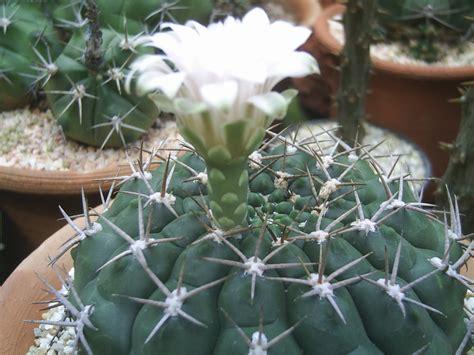 cactus love: กระบองเพชร แสนรัก