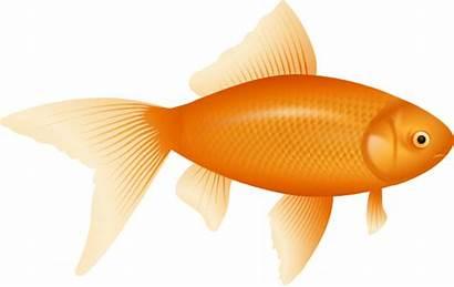 Goldfish Clipart Fish Clip Svg Cracker Cliparts