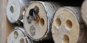 Tiere Im Insektenhotel : insektenhotel insektenhaus im garten selber bauen f r n tzlinge ~ Whattoseeinmadrid.com Haus und Dekorationen