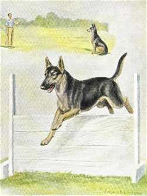 German Shepherd Vintage Dog Prints, Dog Pictures, Dog