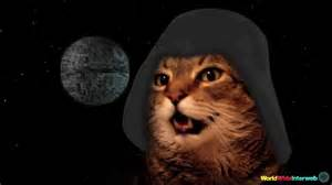 wars cats cat sings wars theme song