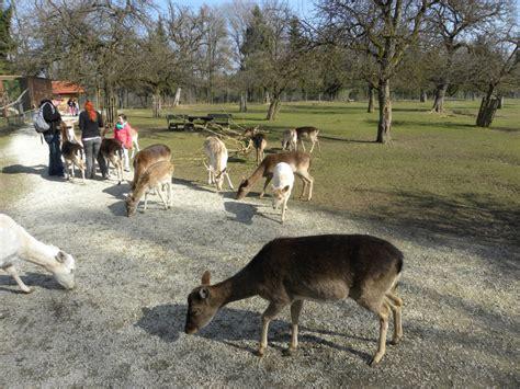 wie viele schritte sind 1 km bilder wildpark ortenburg fotos impressionen