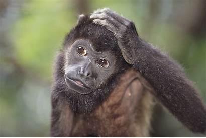 Galapagos Monkey Howler Wildlife Viewing Peru Adventures
