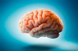La diabetes puede danar al cerebro for Diabetes puede danar al cerebro
