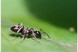 Ameisen Mit Flügel : ameisen die fl gel bei den insekten erkl ren sich so ~ Buech-reservation.com Haus und Dekorationen