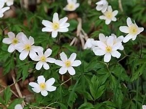 Unkraut Weiße Blüte : wildblumen ~ Lizthompson.info Haus und Dekorationen