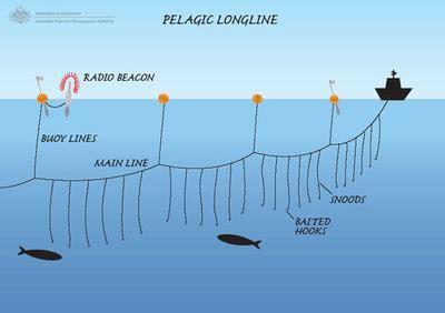 fishing methods explained longlining fafb