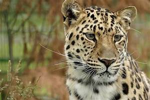 15 Most Endangered Species on Earth - Conserve Energy Future