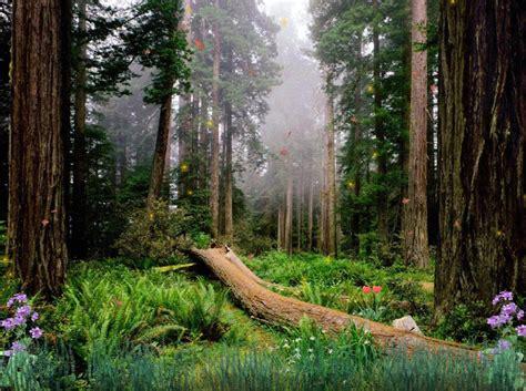 Forest Animated Wallpaper - forest animated wallpaper gallery