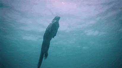 Swimming Godzilla Iguana Ocean Marine Lizard Sobre