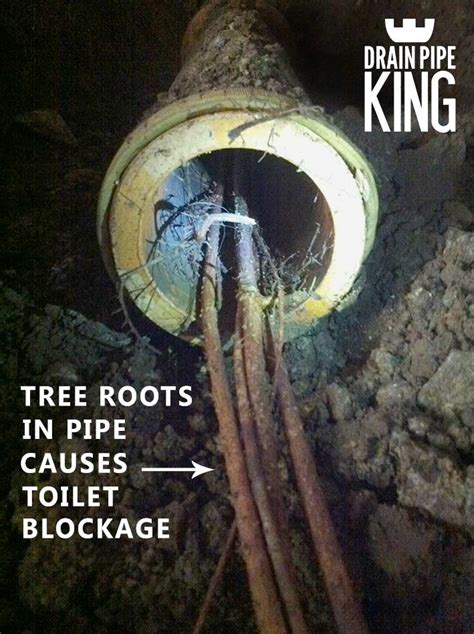 toilet gurgling drain pipe king