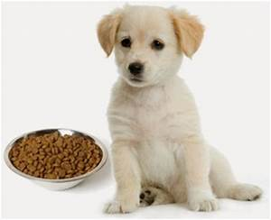 alla ricerca del Siberian Husky: Accoppiamento, gravidanza, cuccioli di cani: in breve!