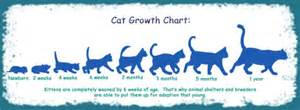 cat weight chart growth chart cats cats growth charts and