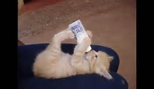animali e natura : dossier gatto lo svezzamento