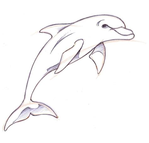 dolphin drawings  pencil   draw  dolphin