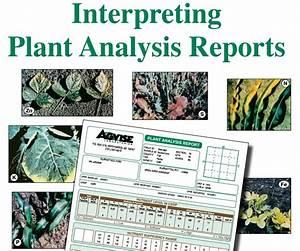 Interpreting Plant Analysis Reports  U2013 Agvise Laboratories