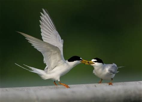 bird ecology study group nature society singapore