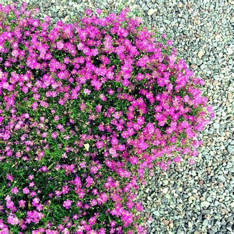 Blumenbeet Gestalten Mit Kies blumenbeet gestalten mit kies 187 so legen sie ein kiesbeet an