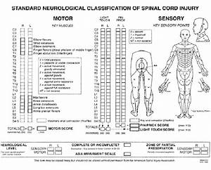 Standard Neurological Classification Of Spinal Cord Injury