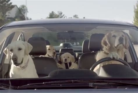 Is The Backseats Large Enough For 2 Dogs?