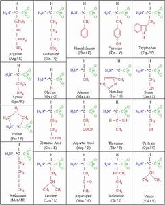 PHYSIOLOGICAL CHEMISTRY BASICS | craniumcommander