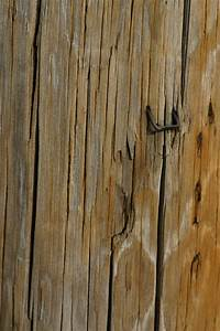 free, images, , , tree, , branch, , texture, , plank, , floor, , trunk, , wall, , soil, , lumber, , telephone, pole