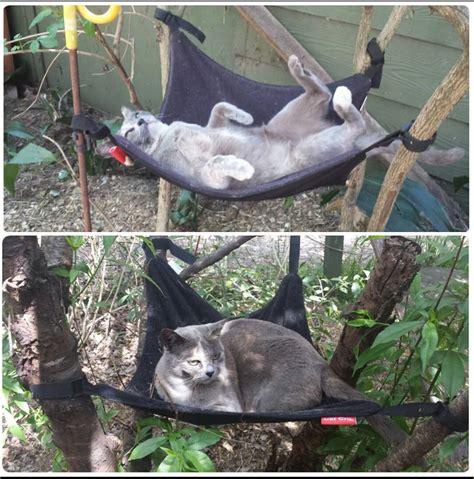 cat hammock with more cat crib cat hammock photos catcrib com