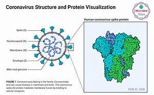 Structure And Genome Of Sars
