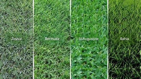 Types Of Florida Grass  Turf And Surf