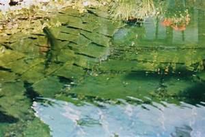 Algen Im Teich Entfernen : algen im teich was nun koifarm straeten ~ Orissabook.com Haus und Dekorationen