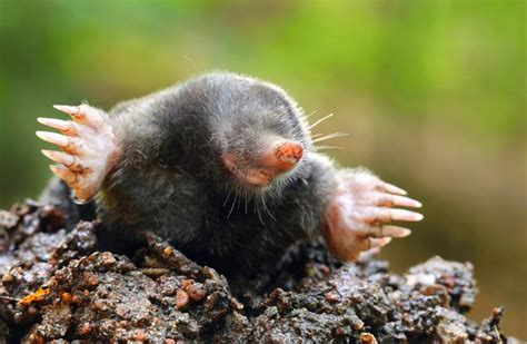 What You Need To Know About The Mole, An Important Chemistry Idea