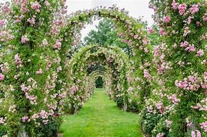 rosenbogen bepflanzen so machen sie39s richtig With französischer balkon mit säulenförmige bäume für kleine gärten