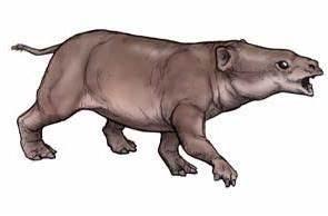 Phosphatherium - ancestral direto de Proboscidea ...  Phosphatherium