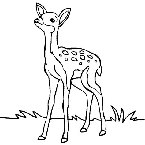Deer Sketch Color 39 Deer Color Page, Realistic Deer