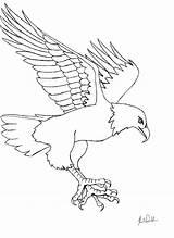 Coloring Trapper Template Eagle Animals Trap sketch template