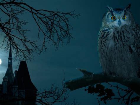 owl halloween animals wallpaper  wallpaper