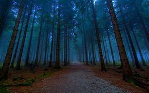 night, forest, wallpapers