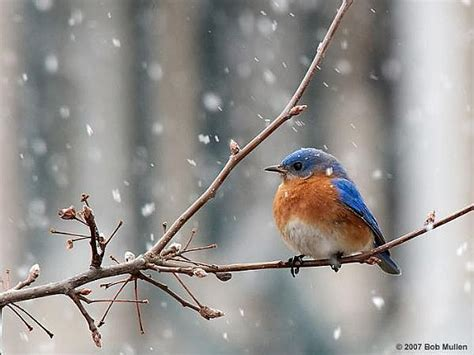 cute birds in winter milad nasri