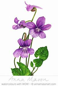 17 best images about VIOLET DRAWINGS on Pinterest | Fine ...