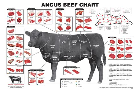 What Everybody Ought to Know About Beef Cuts - Clover ...