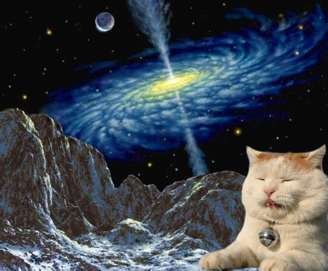 space cats space cats on