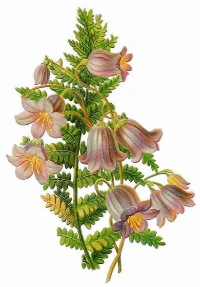 Clip Flowers Spring Flower Botanical Bell Plants