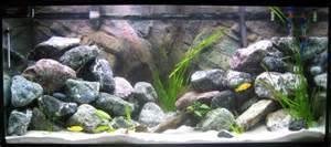 The green aquarium un acquario sano e bello introduzione