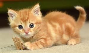 Cute Cat Pictur... Cute Cats